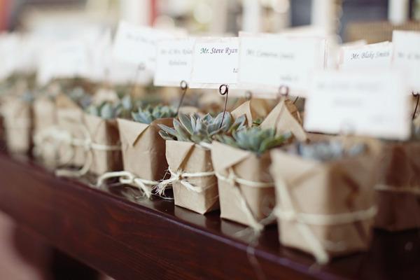Plantas para invitados